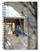 Bluejay Spiral Notebook