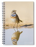 Bluethroat Luscinia Svecica Spiral Notebook