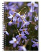 Bluets Spiral Notebook