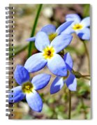 Bluets Upclose Spiral Notebook
