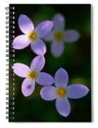 Bluets With Aphid Spiral Notebook
