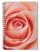 Blush Rose Spiral Notebook