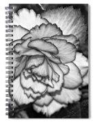 Blushing Bw Spiral Notebook