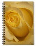 Blushing Cream Rose 3 Spiral Notebook