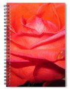 Blushing Orange Rose 7 Spiral Notebook