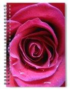 Blushing Pink Rose 3 Spiral Notebook