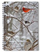 Blushing Red Cardinal In The Snow Spiral Notebook