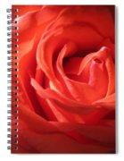 Blushing Orange Rose 1 Spiral Notebook