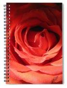 Blushing Orange Rose 3 Spiral Notebook