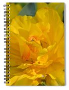 Blushing Yellow Spiral Notebook
