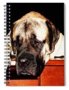 Mastiff Art By Sharon Cummings Spiral Notebook
