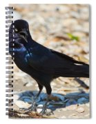 Boat-tailed Grackle Spiral Notebook