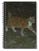 Bob-tail Cat Spiral Notebook
