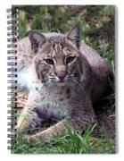 Bobcat 17 Spiral Notebook