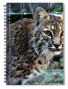 Bobcat Beauty Spiral Notebook