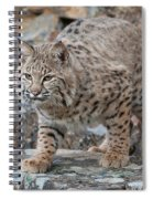 Bobcat On Rock Spiral Notebook