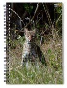 Bobcat On The Prowl Spiral Notebook
