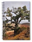 Bobcats Tree Spiral Notebook