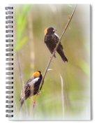 Bobolink Duo Spiral Notebook