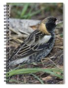 Bobolink Feeding Spiral Notebook