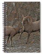 Bodyguard Spiral Notebook