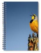 Bokmakierie Bird Calling Spiral Notebook