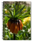 Bold And Showy Orange Crown Imperial Flower  Spiral Notebook