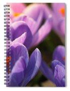 Bold Awakening Spiral Notebook