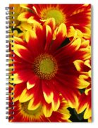 Bold Spiral Notebook