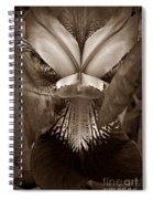 Bold Iris Sepia Spiral Notebook