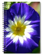 Boldly Beautiful Spiral Notebook