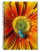 Boll Weevil On Mum Spiral Notebook