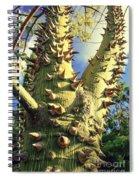 Bombacaceae - Floss Silk Tree - Chorisia Speciosa Hawaii Spiral Notebook