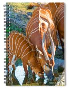 Bongo Mother And Calf Spiral Notebook