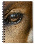 Bongo Skin Pattern Spiral Notebook