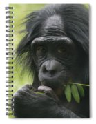 Bonobo Eating Spiral Notebook