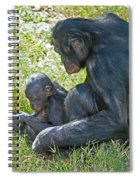 Bonobo Mother And Baby Spiral Notebook