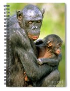 Bonobo Pan Paniscus Mother And Infant Spiral Notebook