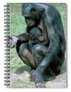 Bonobo Pan Paniscus Nursing Spiral Notebook