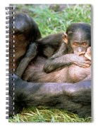 Bonobos Spiral Notebook