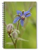 Borage Wildflower - Borage Officinalis - Annual Herb Spiral Notebook
