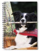 Border Collie At Painting Easel Spiral Notebook