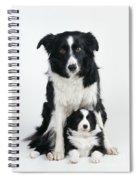 Border Collie Dog & Puppy Spiral Notebook