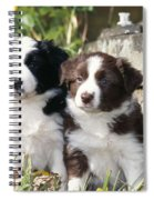 Border Collie Dog, Two Puppies Spiral Notebook