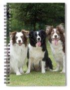 Border Collie Dogs Spiral Notebook
