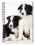 Border Collie Dogs, Two Puppies Spiral Notebook