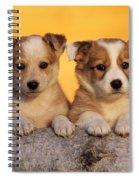Border Collie Puppies Spiral Notebook