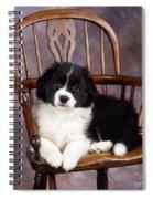 Border Collie Puppy On Chair Spiral Notebook