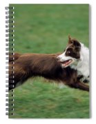 Border Collie Running Spiral Notebook