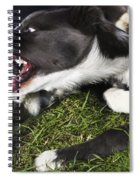 Border Collies Playing Spiral Notebook